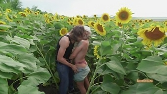 Indian Style Sex On Sunflower Field